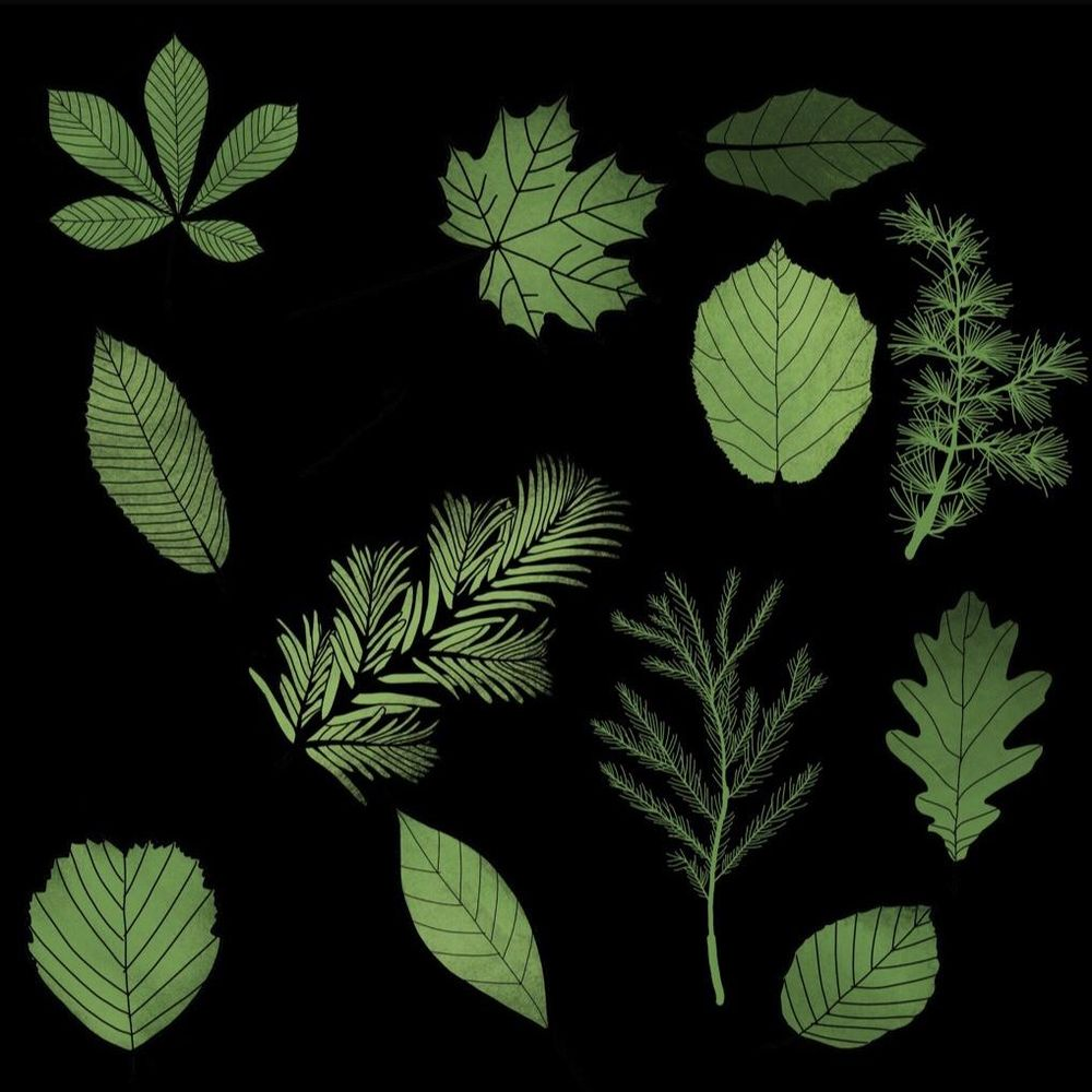 Leaf pattern - image 3 - student project