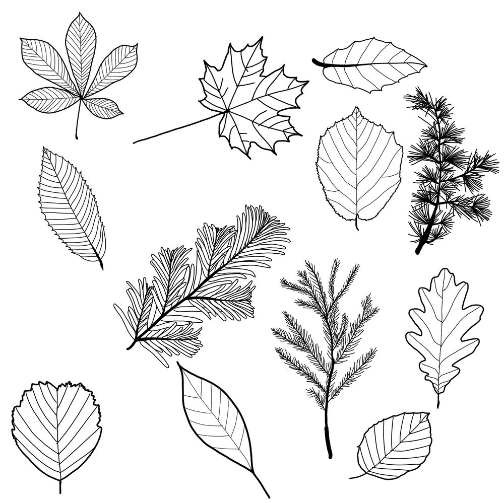 Leaf pattern - image 2 - student project