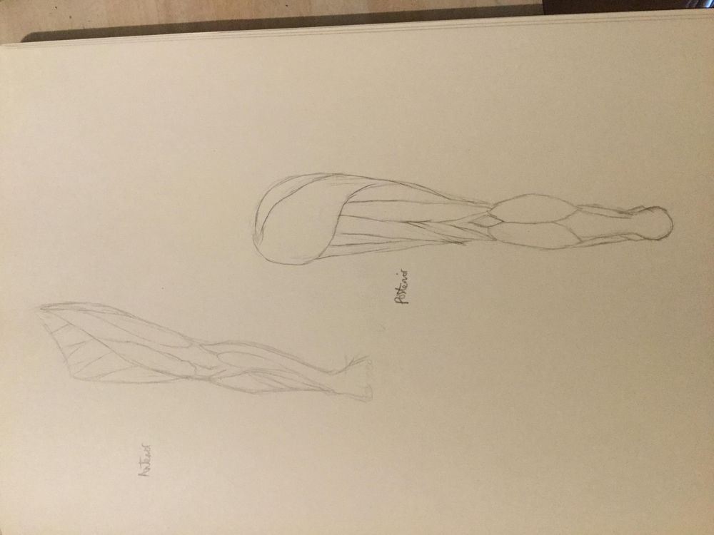 Anatomy of the leg - image 1 - student project