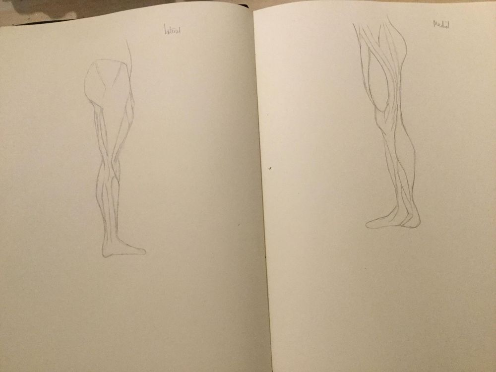 Anatomy of the leg - image 2 - student project