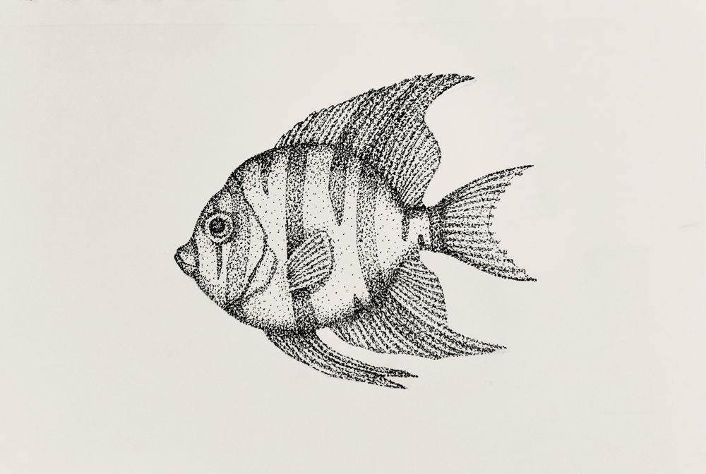 Stippling - Fish - image 1 - student project