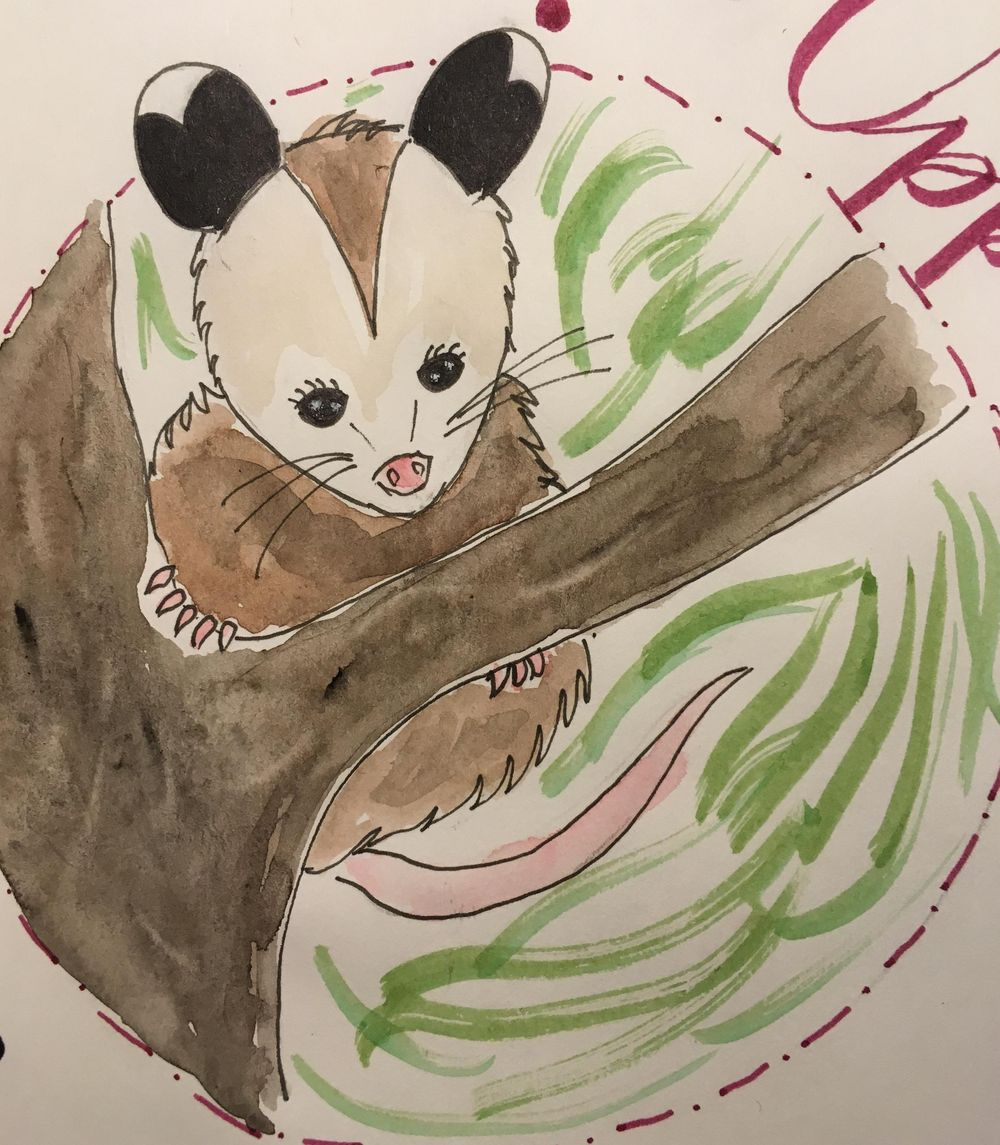 Cute opossum - image 3 - student project