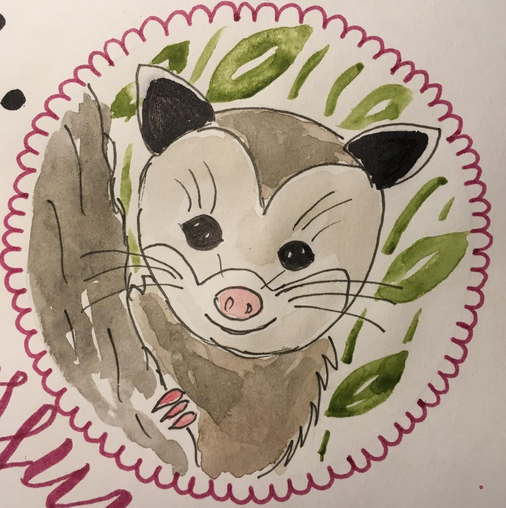Cute opossum - image 2 - student project