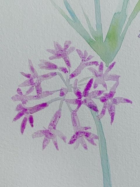 Carnations - image 2 - student project
