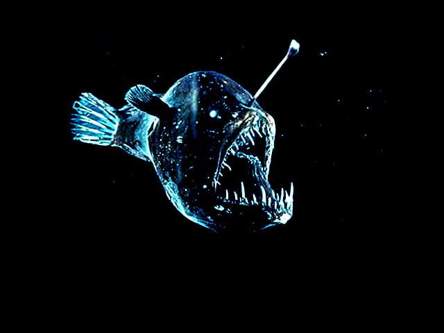 Adorable Anglerfish - image 4 - student project