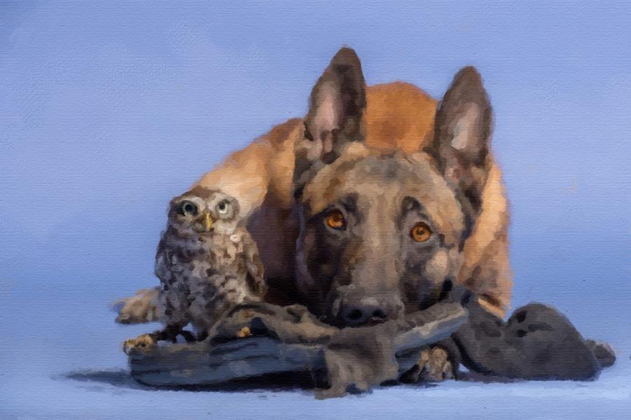 Pet Friends - image 1 - student project