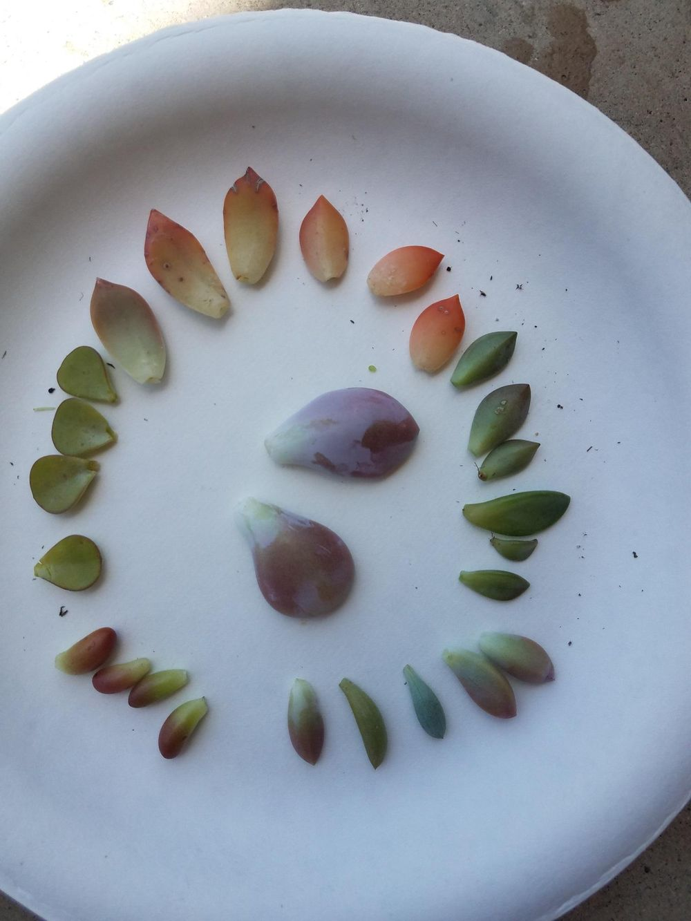 Starting my Succulent Garden!  - image 1 - student project