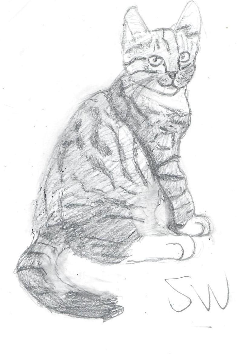 Cat Drawings - image 1 - student project