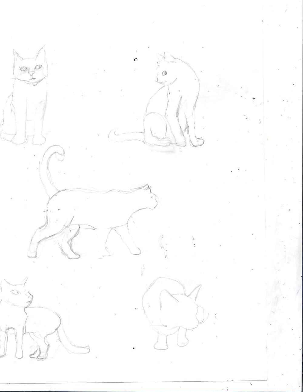 Cat Drawings - image 2 - student project