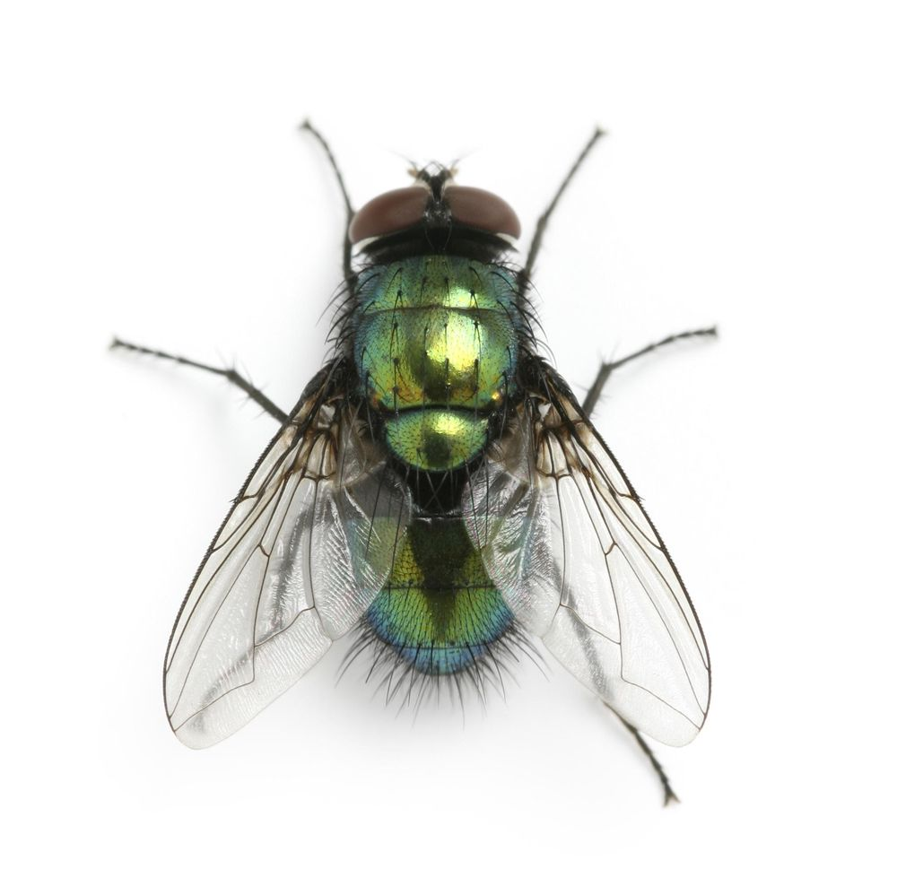 Fly - image 1 - student project