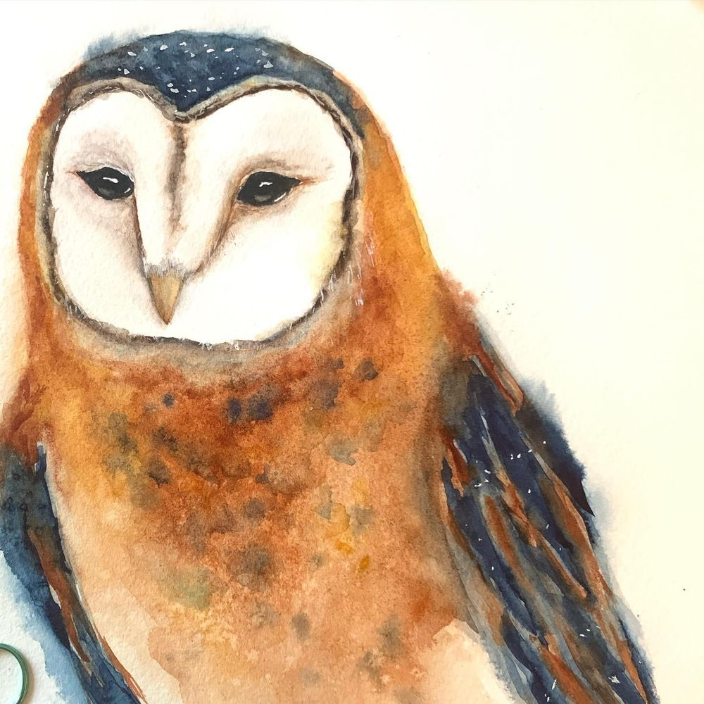 Barn owl - image 2 - student project