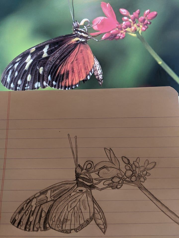 ButterFly! - image 1 - student project