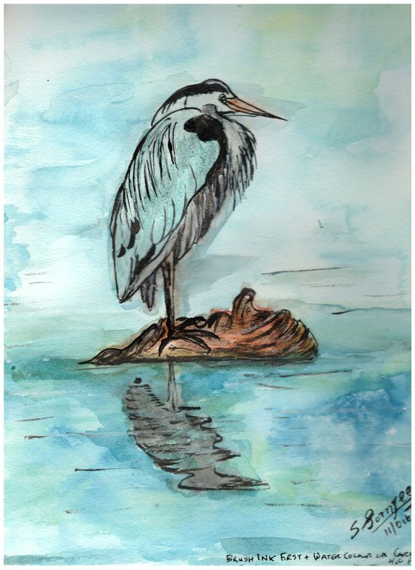 Great Blue Heron - Westcoast Canada  - image 1 - student project