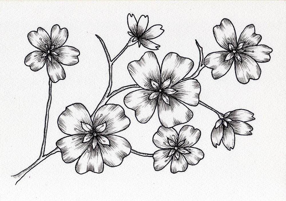 Ink blossoms - image 1 - student project