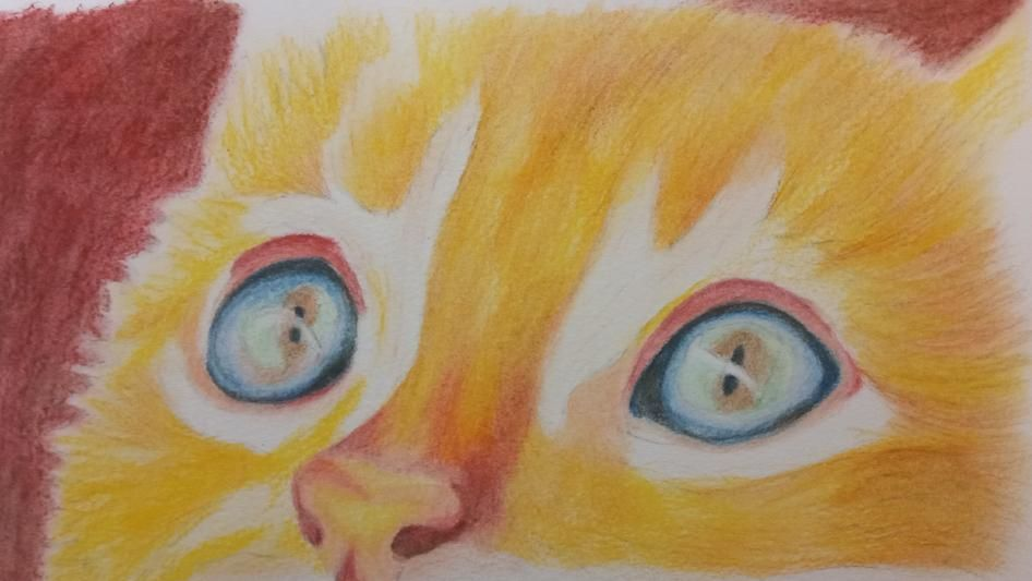 Coloured Pencil Cat - image 3 - student project