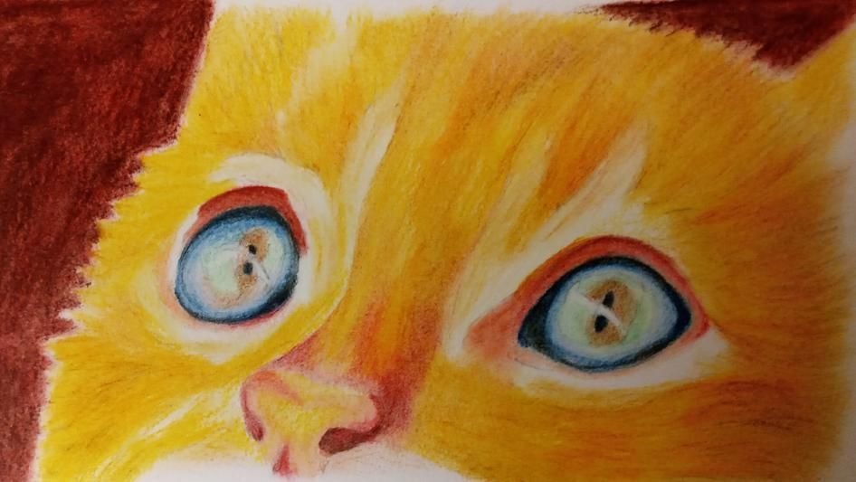 Coloured Pencil Cat - image 4 - student project