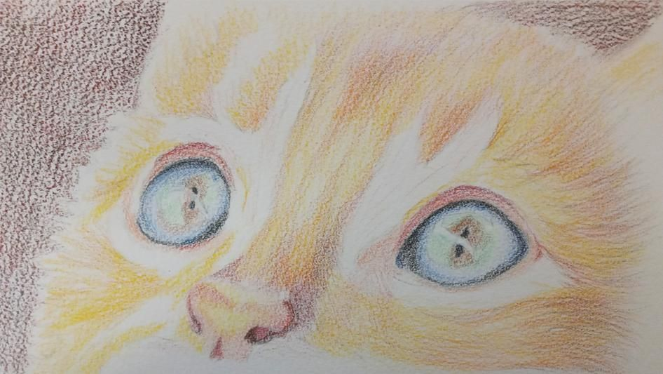 Coloured Pencil Cat - image 2 - student project