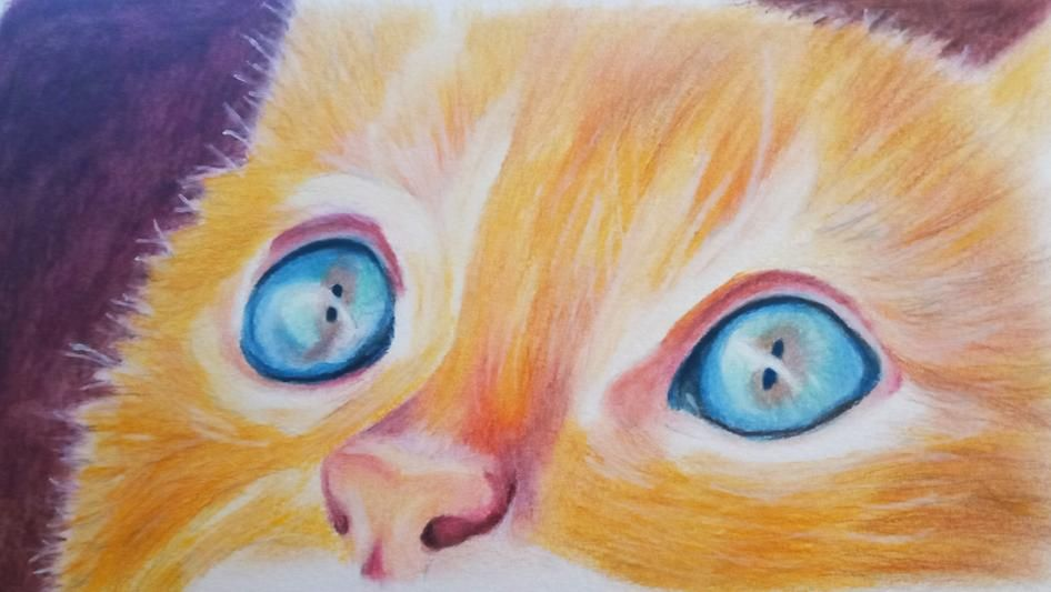 Coloured Pencil Cat - image 5 - student project