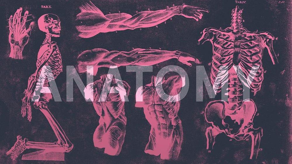 Anatomy - image 3 - student project