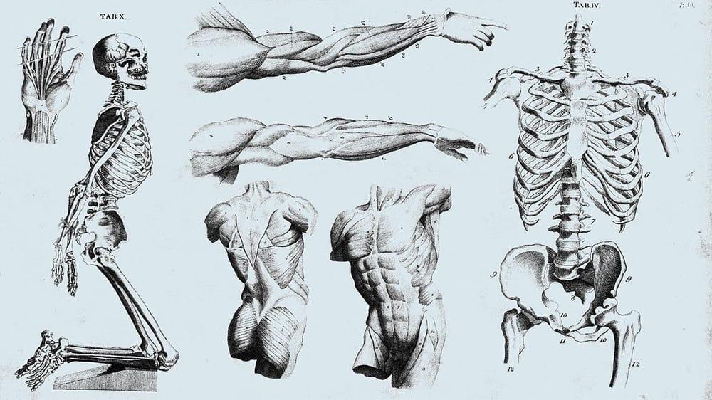 Anatomy - image 2 - student project
