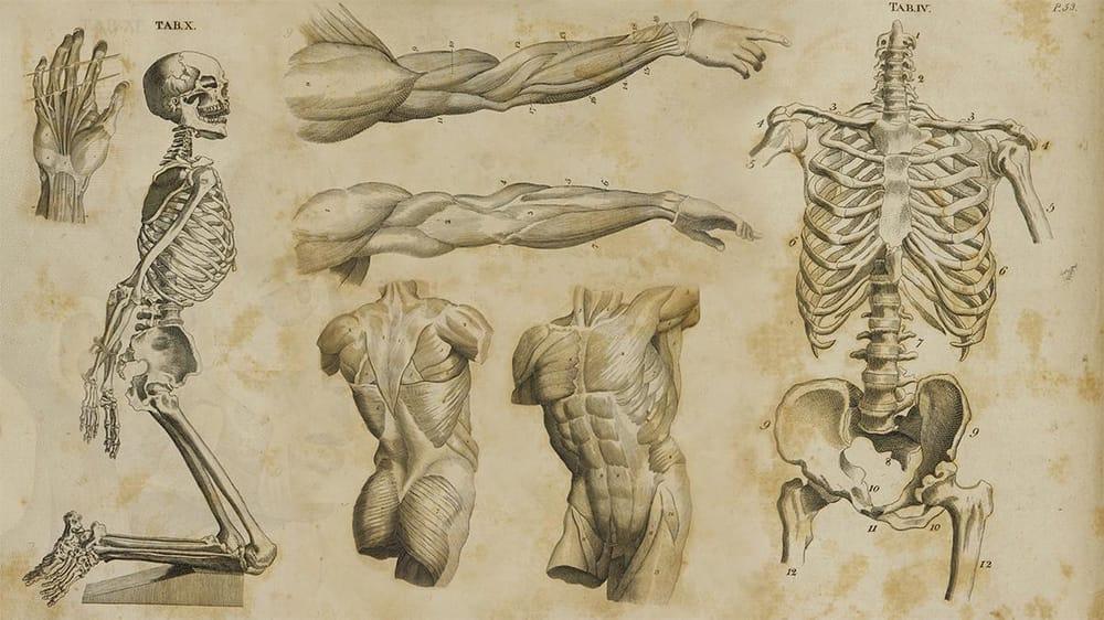 Anatomy - image 1 - student project