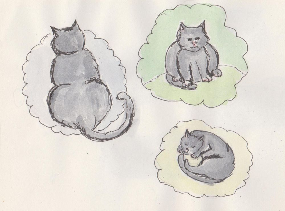 My Lazy cat Dean - image 1 - student project
