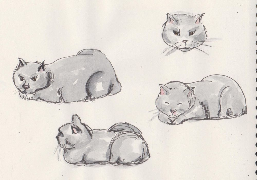 My Lazy cat Dean - image 2 - student project