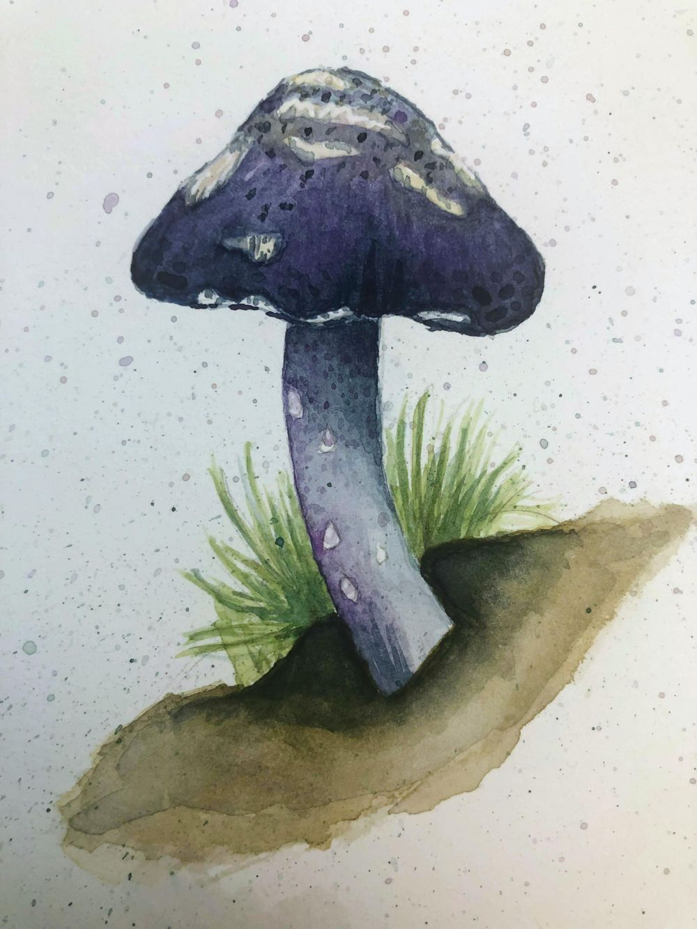 Mushroom & Fern Exercises - image 1 - student project