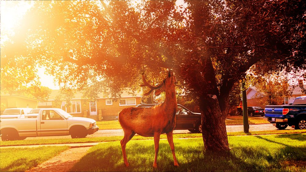 Autumn Light - image 2 - student project