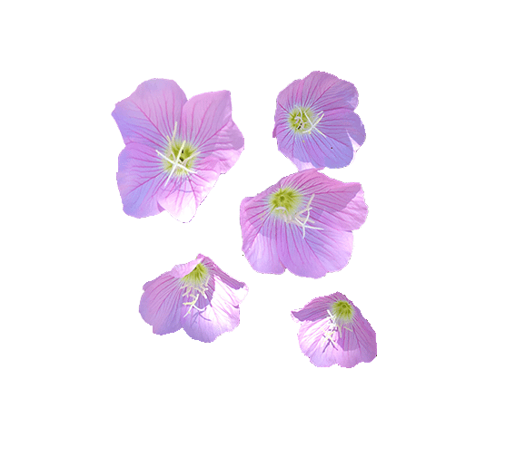 my first floral pattern - image 3 - student project
