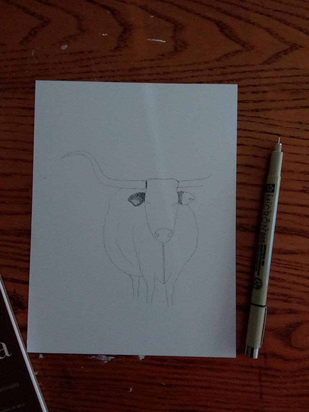 Beginning of a longhorn - image 1 - student project