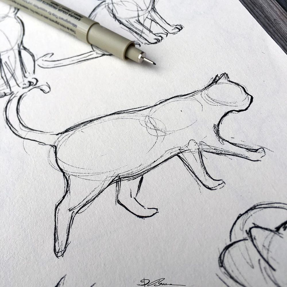 Animal Study: Drawing Cats - image 1 - student project