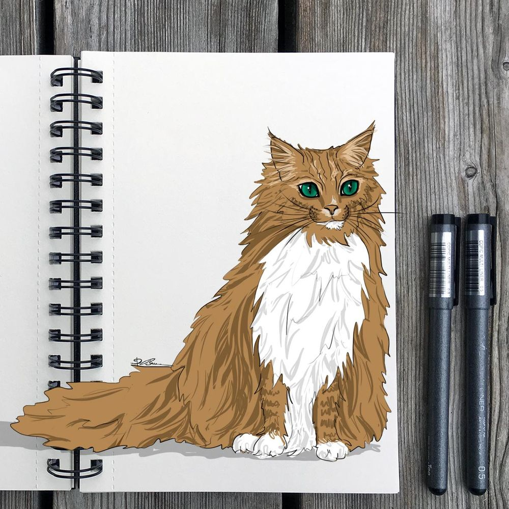 Animal Study: Drawing Cats - image 4 - student project