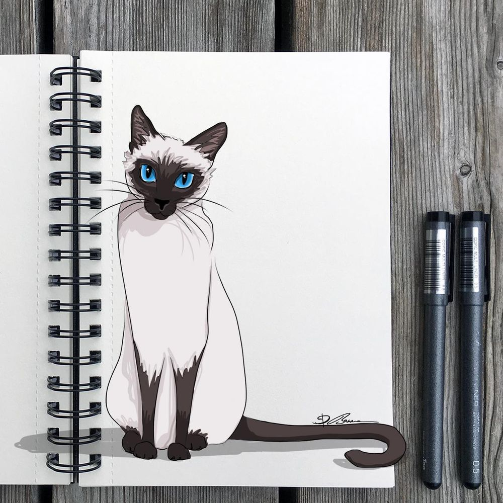 Animal Study: Drawing Cats - image 5 - student project
