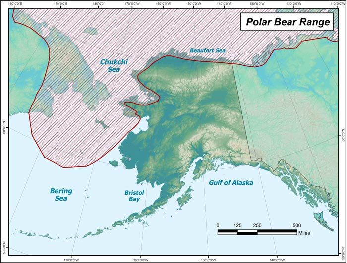 Polar Bear - image 1 - student project