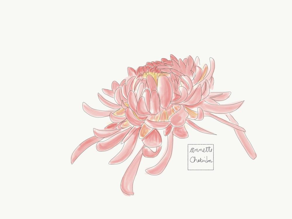 Vera Neumann Inspired Scarf Design-Chrysanthemums - image 2 - student project