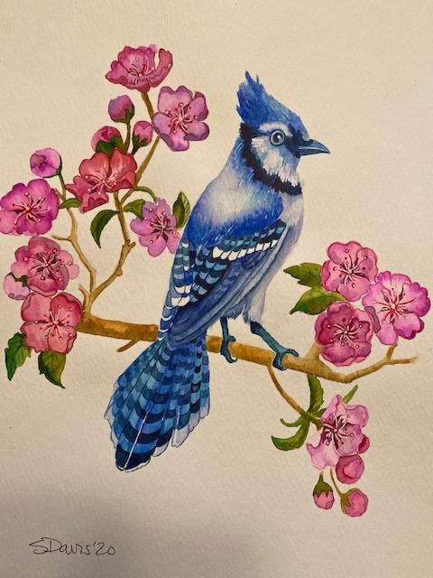 Blue Jay - image 1 - student project