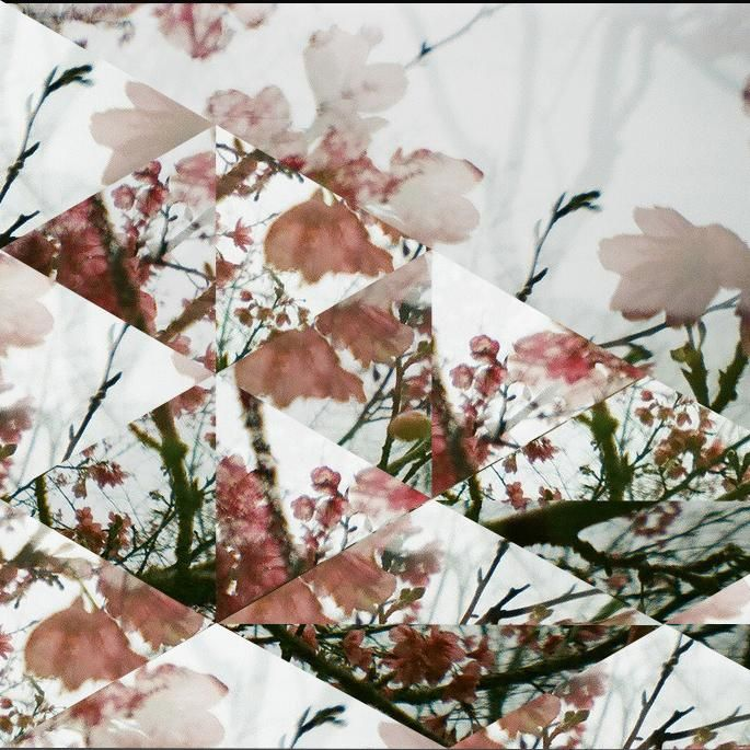 Sakura  - image 1 - student project