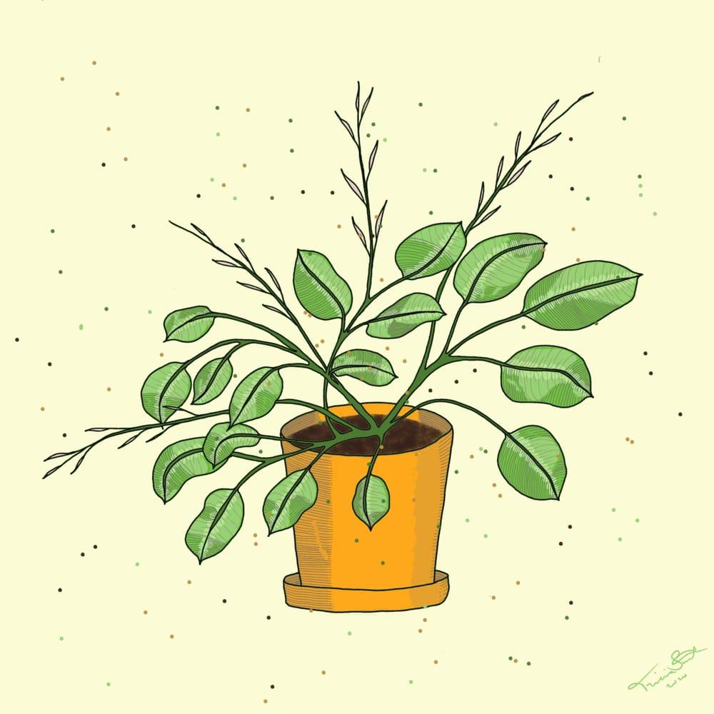 Prayer Plant - image 1 - student project