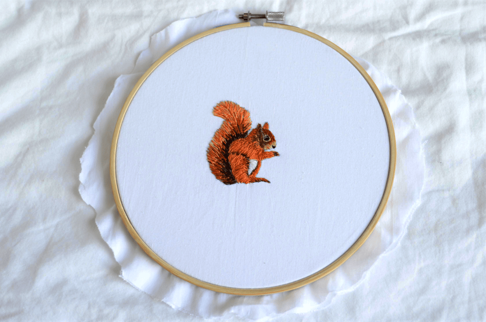 Squirrel - image 1 - student project