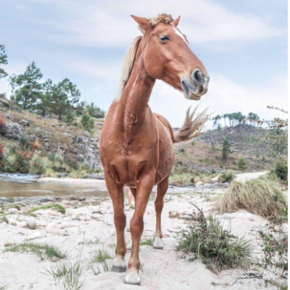Henryetta the Horse - image 1 - student project