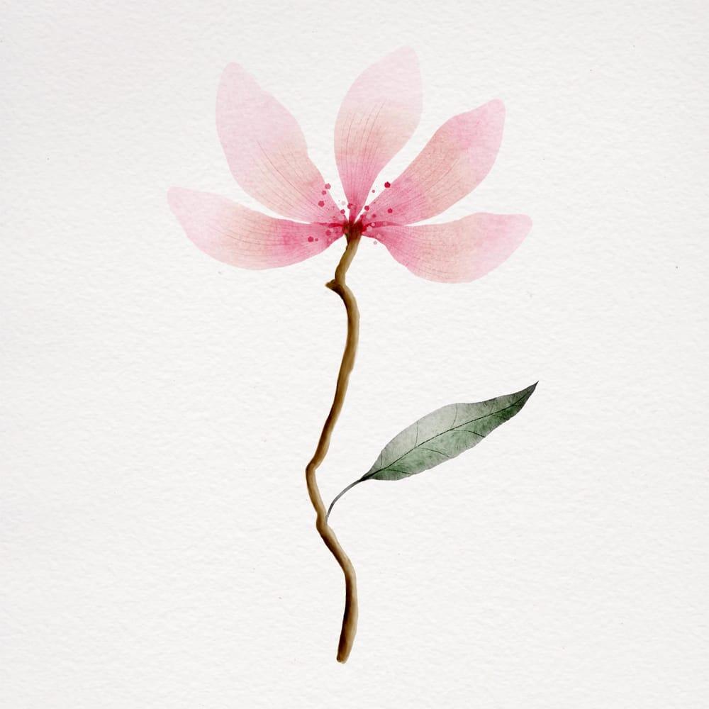 Botanical watercolours - image 1 - student project