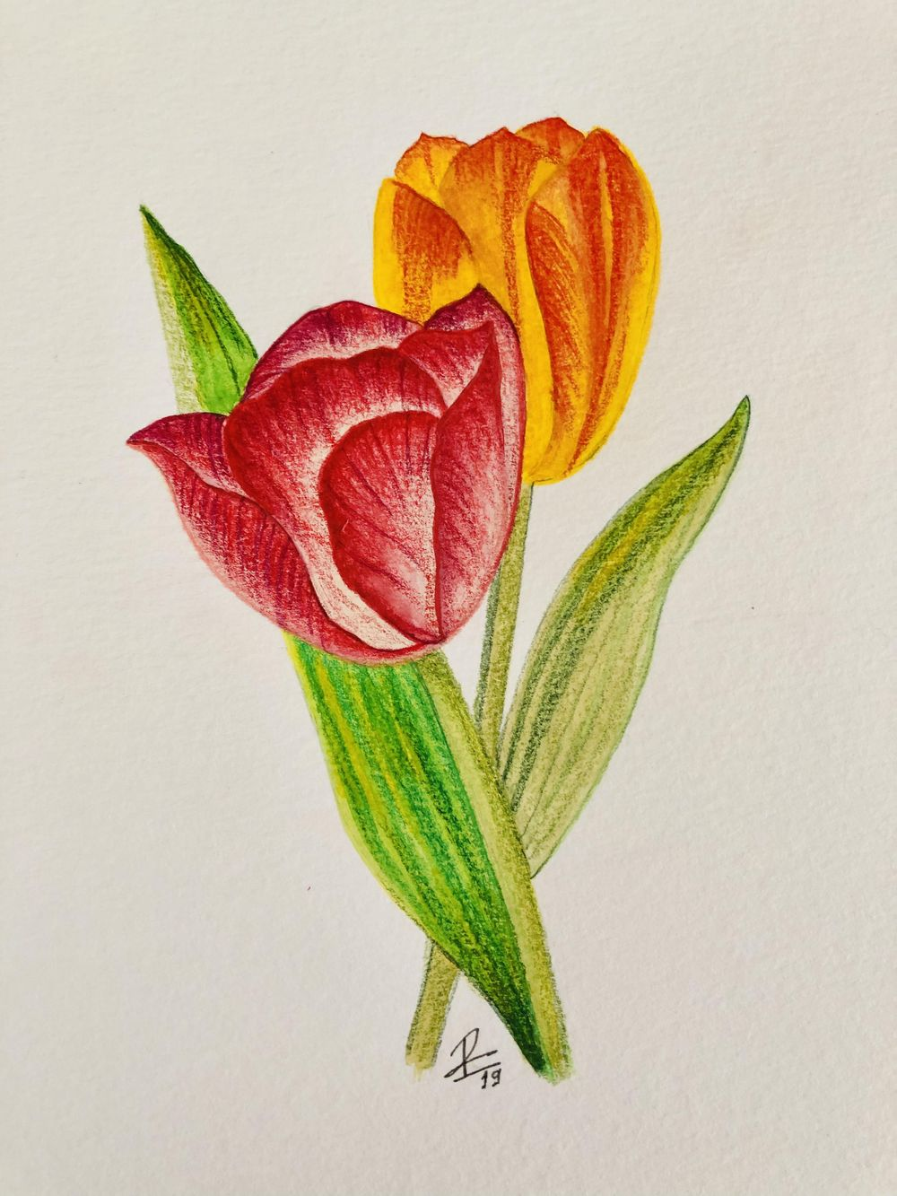 Vintage-Inspired Tulip - image 1 - student project