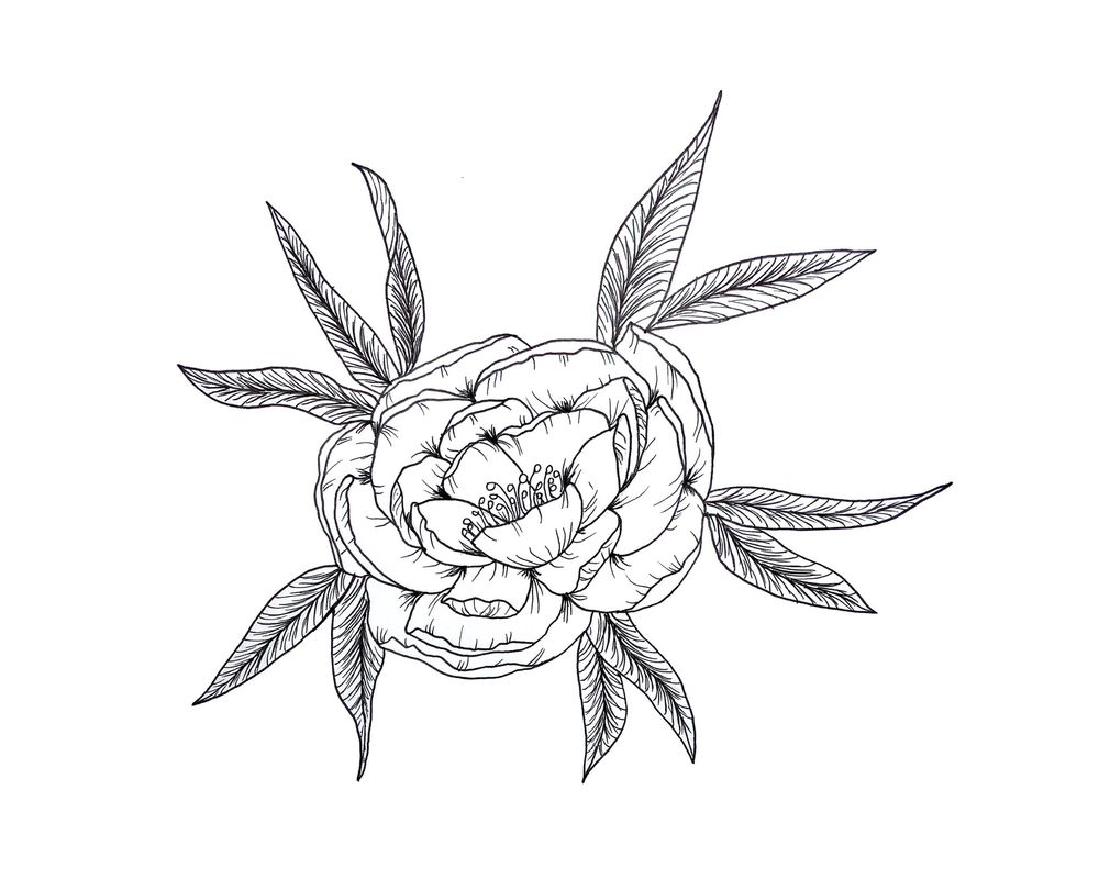 Peony line drawing - beginner - image 1 - student project