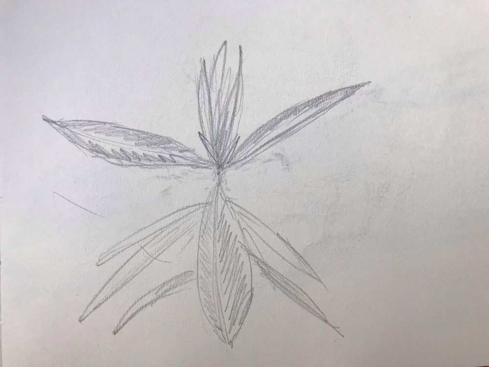 Starting to draw the contours - image 4 - student project