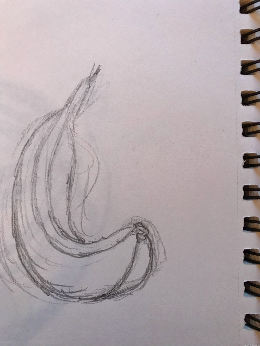Starting to draw the contours - image 3 - student project