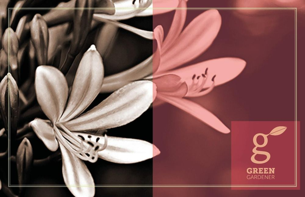 Adobe InDesign (All exercises) - image 11 - student project