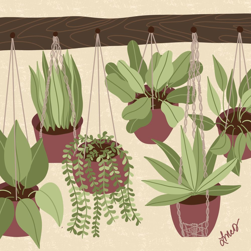 Plant Illustrations - image 2 - student project