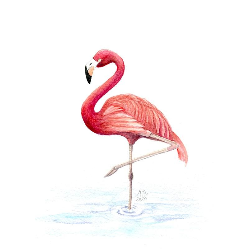 Project Flamingo - image 1 - student project