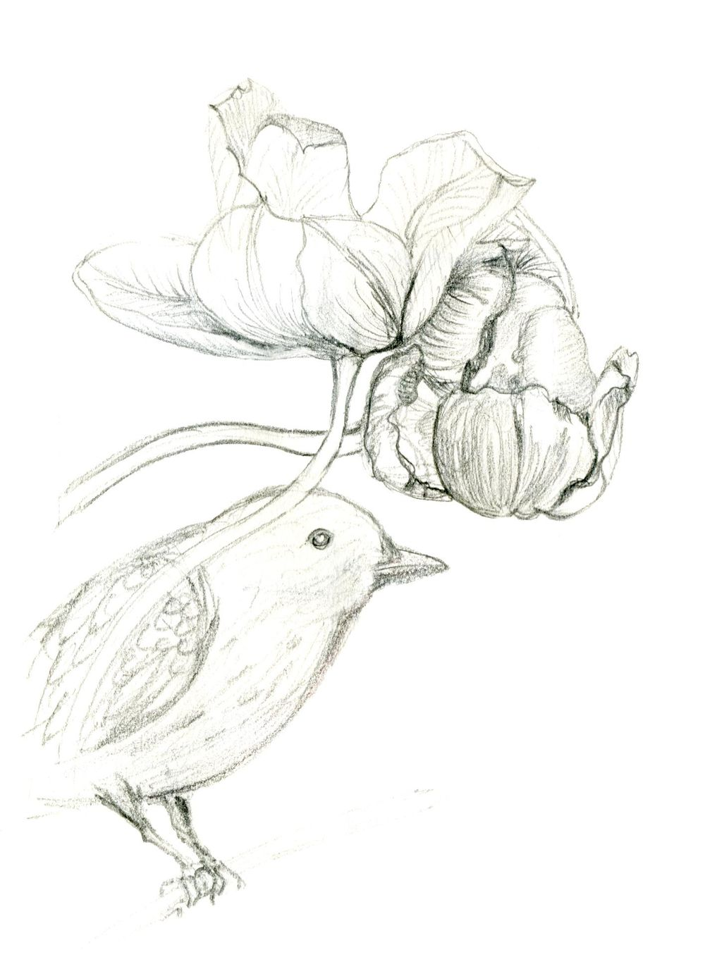 Tulips and Blackbird - image 5 - student project